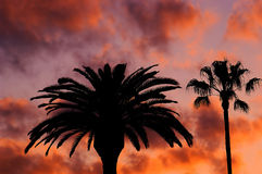 Beverly hills sunset. Palm trees against sunset royalty free stock photos