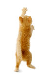 Bevindend katje Stock Fotografie