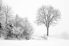 Bevindende boom in sneeuwonweer Stock Foto's