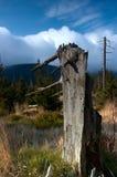 Bevindende dode bomen Stock Foto