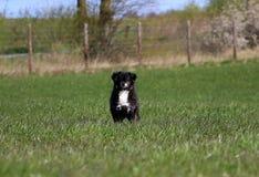 Bevindende gemengde hond Royalty-vrije Stock Afbeeldingen