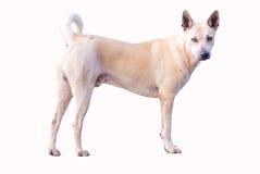 Bevindende hond Royalty-vrije Stock Afbeeldingen