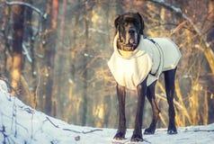Bevindende hond in het bos royalty-vrije stock foto's