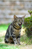 Bevindende Kat Stock Foto
