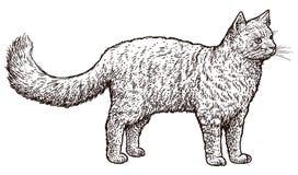Bevindende kattenillustratie, tekening, gravure, inkt, lijnkunst, vector Stock Afbeeldingen
