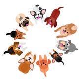 Bevindende kleine honden die omhoog in cirkel kijken stock illustratie