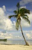 Bevindende palm Stock Afbeelding