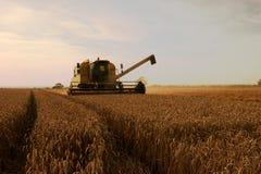 Bevindende tarwe, oogsttijd. Stock Foto's