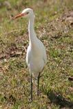 Bevindende vogel Stock Fotografie