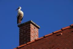 Bevindende vogel Stock Afbeelding