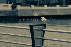 Bevindt de eenzaamheids trotse zeemeeuw zich op de dijk op de achtergrondwaterkant in retro stijl stock foto's