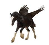 Bevingad hingst (Pegasus) Arkivbild