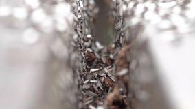 Bevingade myror som svärmer i mellanrummet mellan träbrädemakroen lager videofilmer
