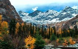 Bevittna skönheten av naturen Arkivfoto