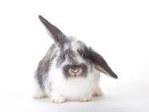 Bevlekt geïsoleerdd konijntje, Royalty-vrije Stock Afbeeldingen