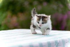 Bevlekt katje die zich op lijst in de tuin bevinden stock foto's