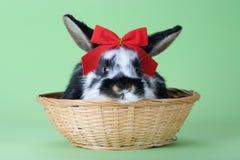 Bevlekt konijntje met rode geïsoleerder vlinderdas, Royalty-vrije Stock Fotografie