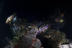 Bevlekt vissen en koraal op het overzeese leven met zwarte achtergrond royalty-vrije stock foto's