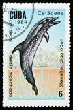 Bevlekte dolfijn Stenella plagiodon, circa 1984 Stock Afbeeldingen