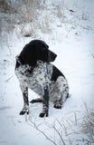 Bevlekte hondzitting in de sneeuwhond Stock Foto's