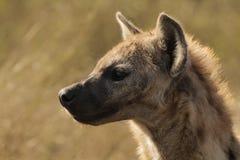 Bevlekte Hyena in Profiel Royalty-vrije Stock Fotografie