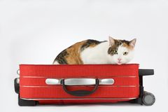 Bevlekte kat in de geïsoleerdel koffer, Royalty-vrije Stock Afbeelding