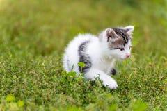 Bevlekte katjesgang in het gras bij tuin stock foto's