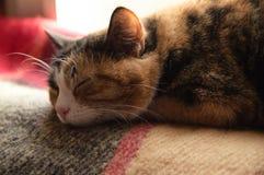 Bevlekte kattenslaap op de deken De kat slaapt op een deken in de zon De pot slaapt op het venster onder de zon stock afbeeldingen