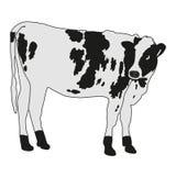 Bevlekte koe vectorillustratie royalty-vrije illustratie