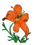 Bevlekte oranje Lelie Royalty-vrije Stock Afbeelding