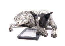 Bevlekte Texas Heeler-hond die naast een computertablet liggen Stock Fotografie