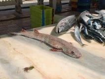 Bevlekte vissen op de teller Royalty-vrije Stock Foto's