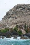 Bevolking van een vogelreservaat bij Zeven Eilanden Royalty-vrije Stock Fotografie