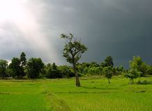 Bevor Storm 1. Thailand, Storm, Landscape, Asia, Siam, Tree, green, weather, sky, meadow royalty free stock photos