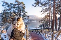 Bevroren Abant-meer in het Nationale Park van Golcuk in Bolu, Turkije royalty-vrije stock foto