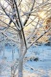 Bevroren appelboom Stock Foto's