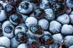 Bevroren aronia chokeberry bessen in een kom stock afbeeldingen