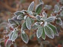Bevroren azalea Royalty-vrije Stock Afbeeldingen
