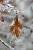 Bevroren Blad Stock Afbeeldingen