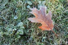 Bevroren blad in de tuin Royalty-vrije Stock Afbeelding