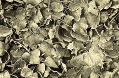 Bevroren bladeren Royalty-vrije Stock Afbeeldingen
