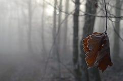 Bevroren Bladeren Stock Fotografie
