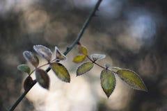 Bevroren bladeren met vage achtergrond Royalty-vrije Stock Afbeelding