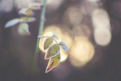Bevroren bladeren met vage achtergrond Stock Afbeelding