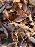 Bevroren bladeren, r stock fotografie