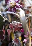 Bevroren Bloem stock afbeeldingen
