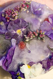 Bevroren bloem van liefde-in-luiheid Stock Afbeeldingen