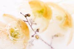 Bevroren Bloemen stock afbeelding