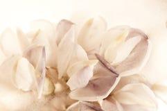 Bevroren bloemen. bloesems in het ijsblokje stock afbeelding