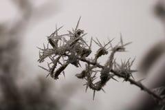 Bevroren boeg met naalden van ijs royalty-vrije stock afbeelding